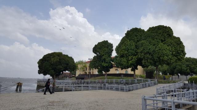 As mangueiras de Belém, um caso à parte