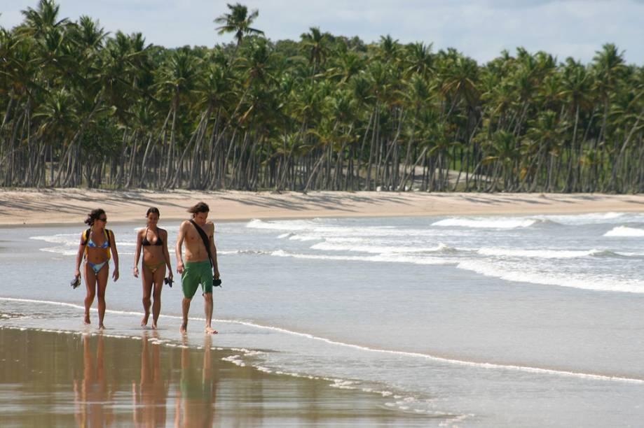 Coqueiral na Praia da Cueira, na Ilha de Boipeba