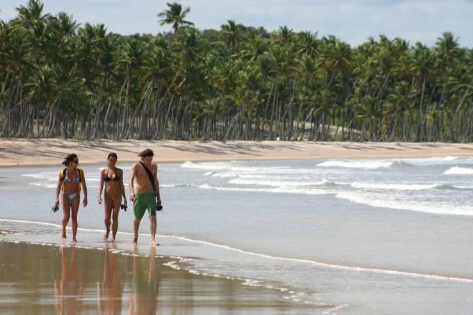 Coqueiral na Praia da Cueira, a caminho de Moreré, Ilha de Boipeba, Bahia