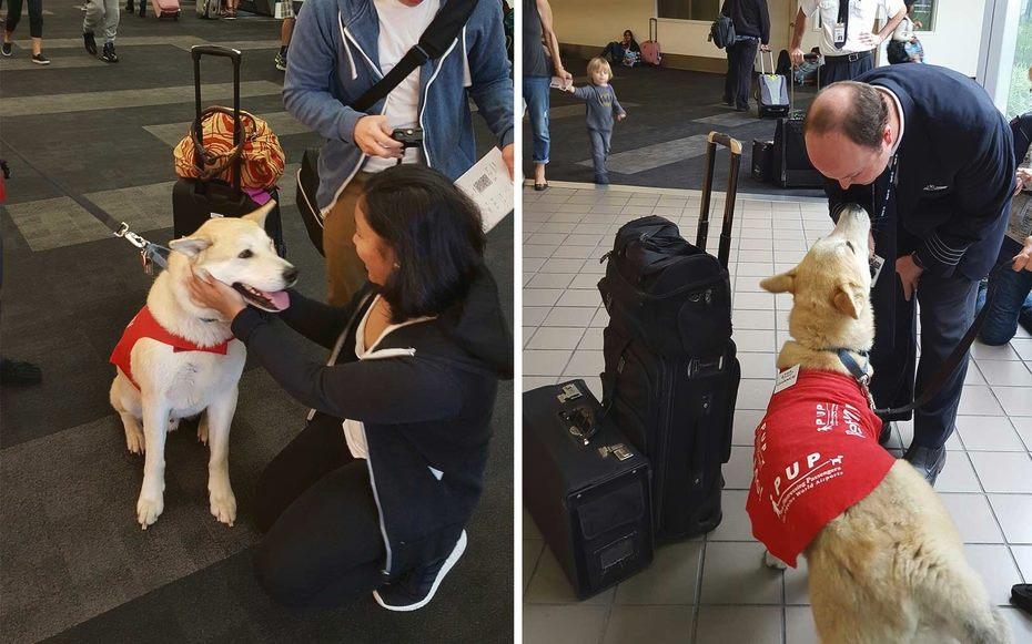 O programa LAX PUP's encanta passageiros de todas as idades no Aeroporto de Los Angeles (crédito: Reprodução Facebook @lainternationalairport)