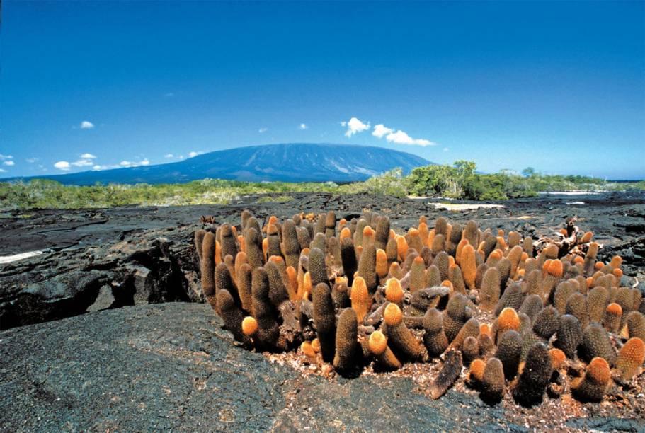 Cactos evoluídos no Arquipélago de Galápagos