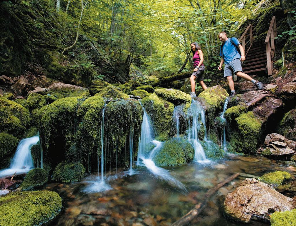 Trilha sobre riacho no Fundy National Park, no Canadá