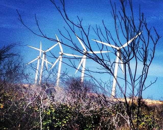 Pirocópteros gigantes de energia eólica na beira da estrada sinalizam: você está saindo de Canoa Quebrada (foto: Ludmilla Balduino)