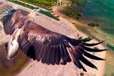 Águia sobrevoa o Parque Nacional de Bali Barat, na Indonésia