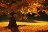 Outono em Bennington Vermont, Estados Unidos