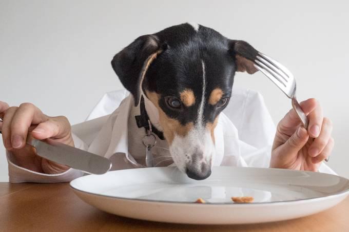 Cachorro comendo