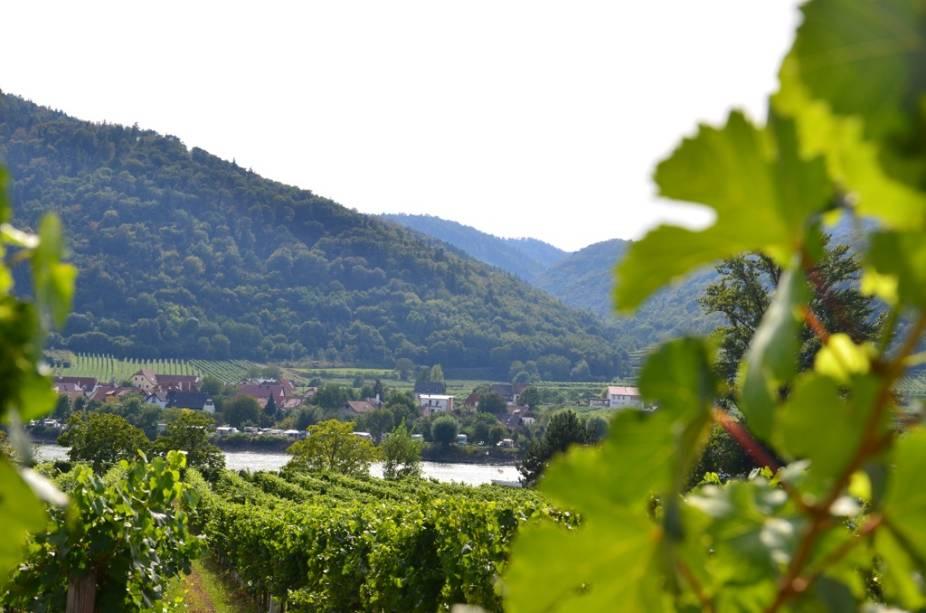Em todo vale do Danúbio encontram-se extensos vinhedos, como estes em Dürnstein, que darão origem a vinhos refrescantes como o Riesling e o Grüner Veltliner