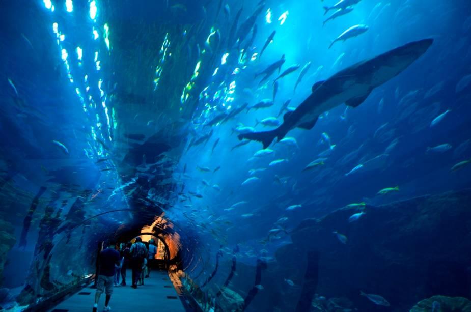 O incrível Dubai Aquarium fica dentro do maior shopping center do mundo, o Dubai Mall