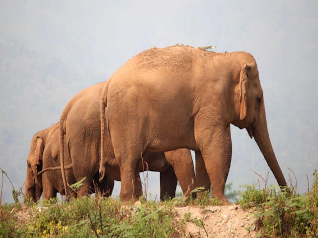 Local irá abrigar elefantes africanos e asiáticos (Foto: Divulgação)