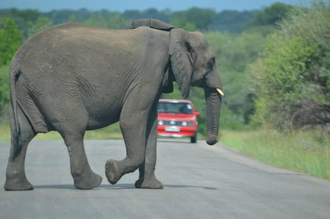 elephant-765735_1920
