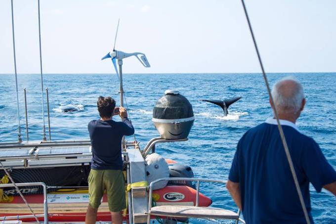 Família Schurmann e as baleias jubartes