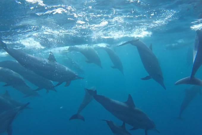 Família Schurmann e golfinhos