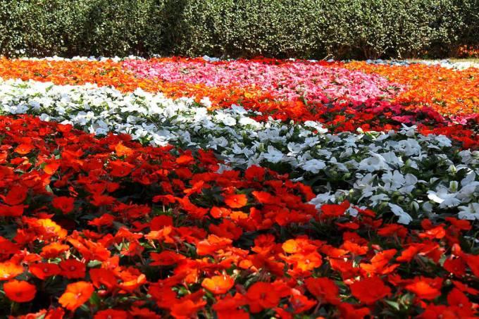 Flores em Holambra, São Paulo