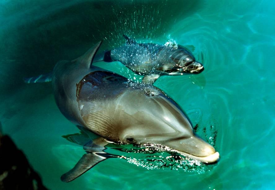 Mergulhar com golfinhos é uma das opções de lazer em Xcaret
