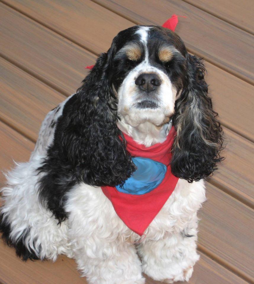 """A cadelinha Gracie é uma das """"voluntárias"""" do aeroporto de San Jose, que tem o programa desde os atentados de 11/09 (crédito: Reprodução Facebook @flysanjose)"""