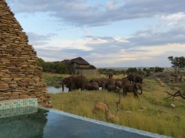 """Happy hour com elefantes no novo Four Seasons Safari Lodge, """"o"""" resort do Serengeti, na Tanzânia"""