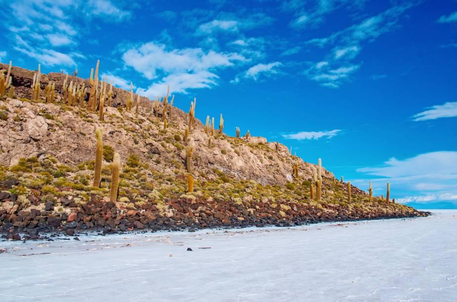 A Ilha Incahuasi, no Salar de Uyuni, é povoada por cactos com séculos de idade, com espinhos tão compridos que assoviam com o vento forte