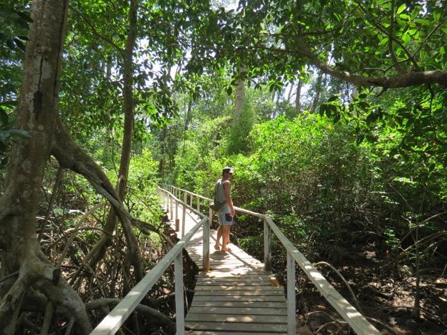 O manguezal fora de série que leva até a Barra Velha
