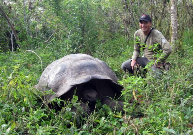 Tartaruga-gigante-de-galápagos