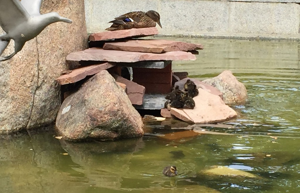 As tartarugas ficam no lago em frente ao Palácio de Cristal
