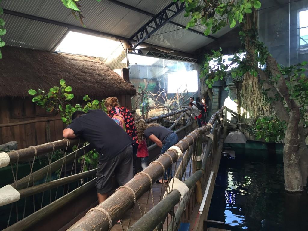 A Amazônia do Aquário de SP