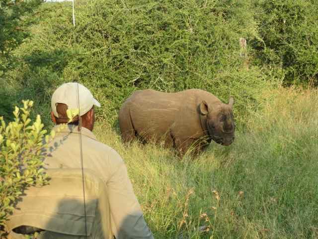 Momento off-road, cara a cara com o rinoceronte, na reserva privada do Royal Malewane