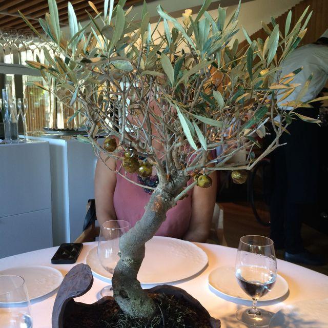 A primeira surpresa: um bonsai de oliveira de verdade com azeitonas carameladas penduradinhas nos galhos