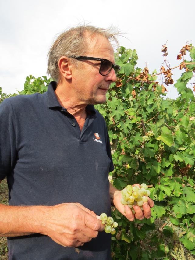 Walter Massa confere a qualidade da uva