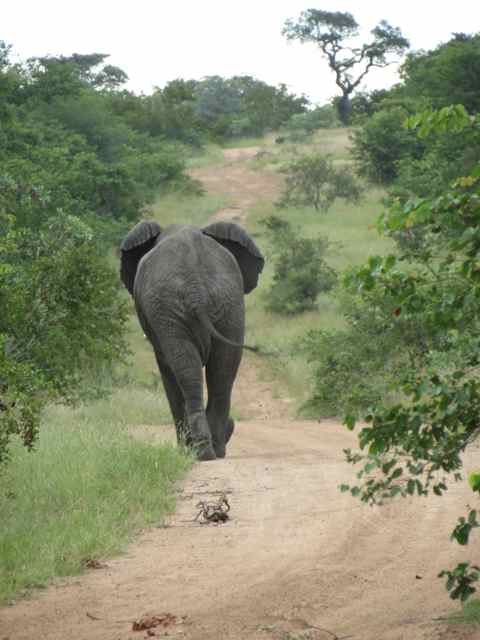 Olha o passo do elefantinho...