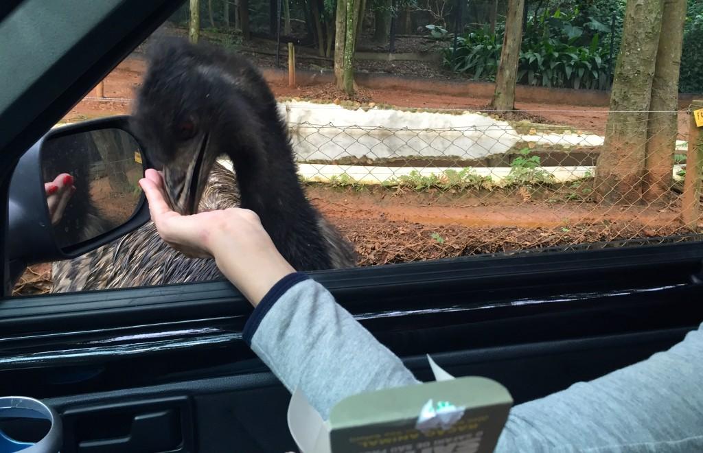 Só é permitido alimentar os animais com a ração comprada no Zôo (foto: Família Nômade)
