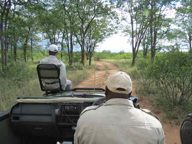 Treker (na cadeirinha da frente) + ranger, a dupla dinâmica das reservas privadas (na foto, Ngala Game Reserve)