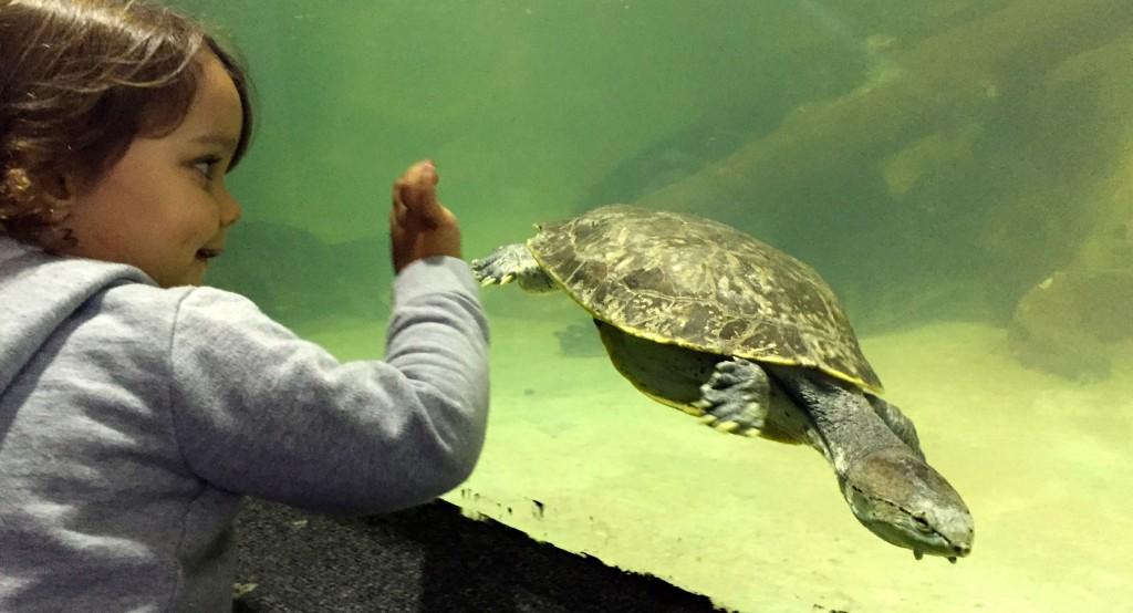 O Aquário do Guarujá te, 3 mil animais em exposição