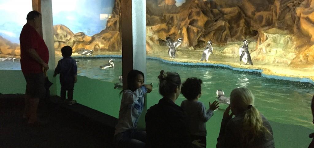 Pinguins encantam os visitantes