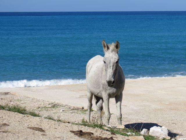 O cavalo branco solitário