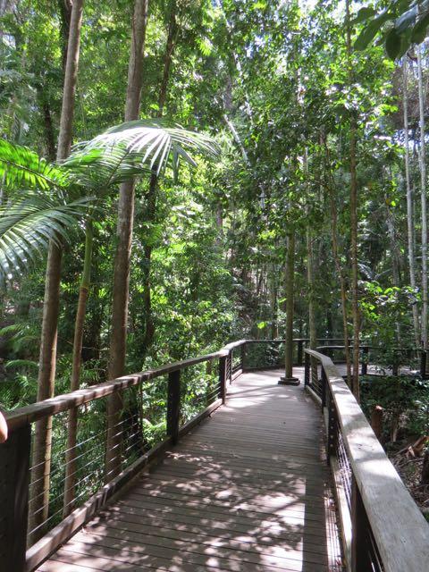A passarela e madeira que atravessa o bosque