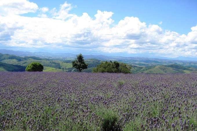 Impressionismo puro na roça à Provence