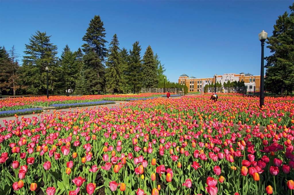 Todas as cores da primavera no jardim botânico da cidade