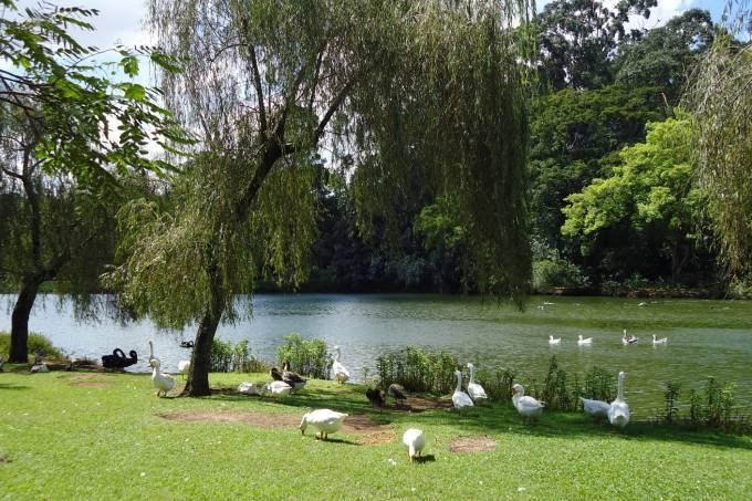 Lago no Ibirapuera / Foto Divulgação