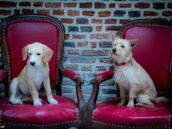 Cãezinhos fofos interagem com os clientes no Le Waf, em Lille, na França