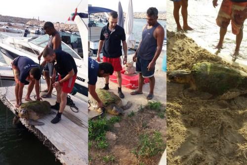 Lebanon-sea-turtel-5-1