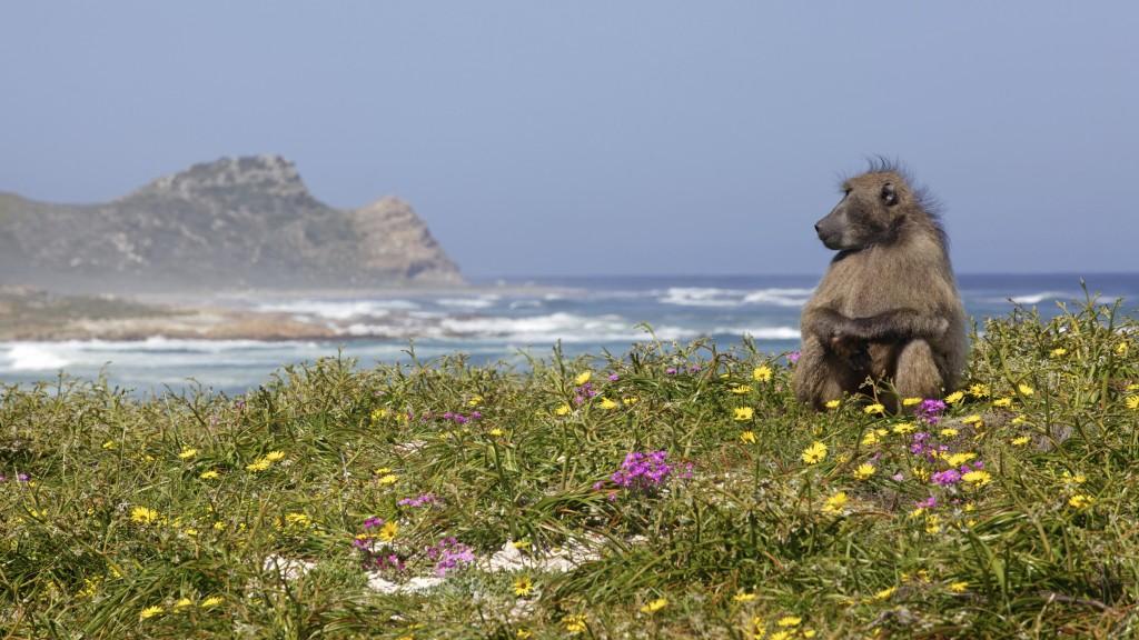 Eles são os donos da praia (foto: iStock)