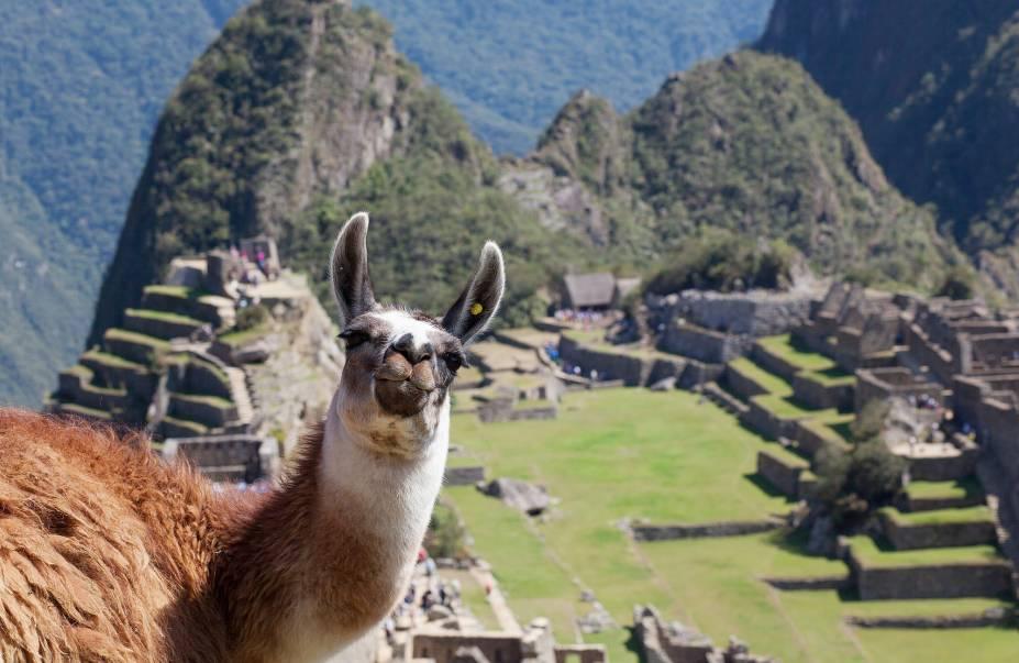 Lhama posa para foto em uma das paisagens mais clicadas de Machu Picchu