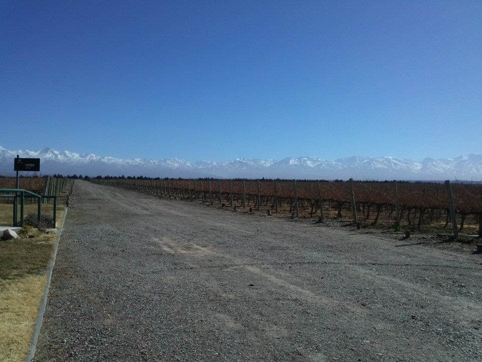Menzoza: vinícolas para todos os lados e a Cordilheira ao fundo