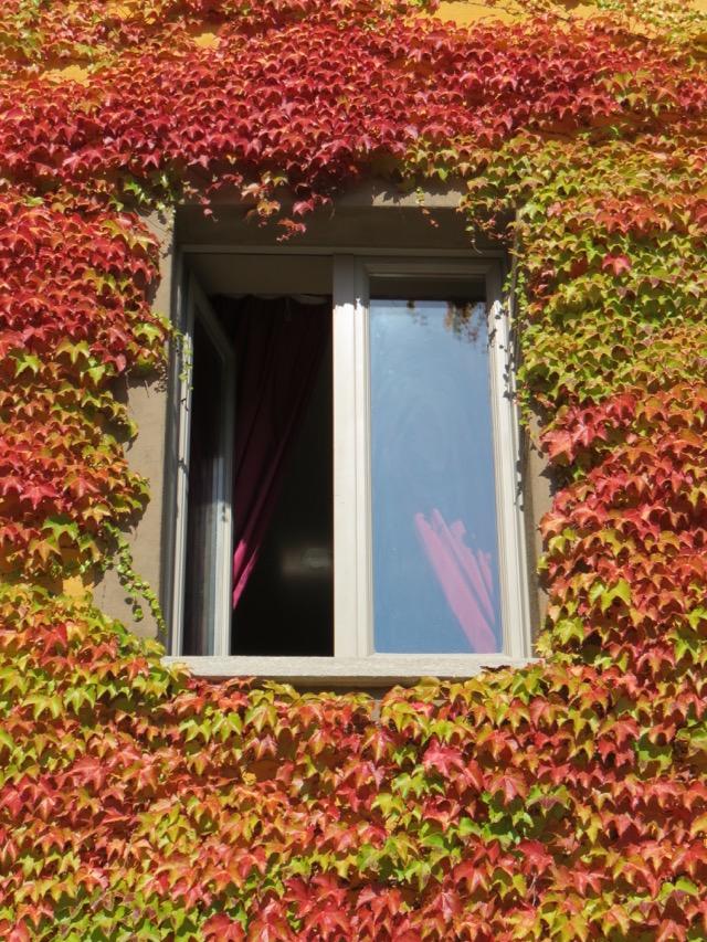 Minha janela vista de baixo