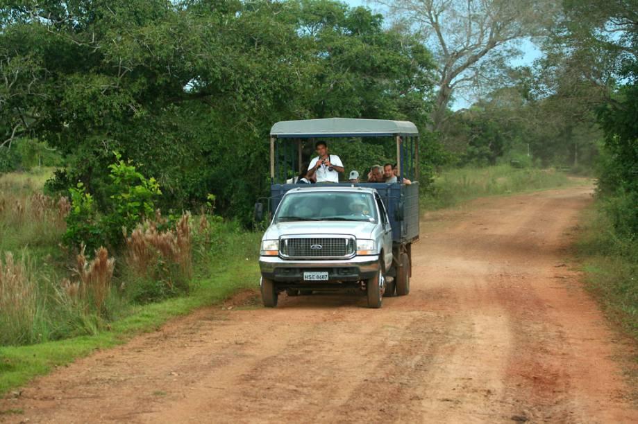 Safari fotográfico no Refúgio Ecológico de Caiman, Pantanal do Mato Grosso do Sul, Miranda (MS). Dentro do veículo você consegue percorrer grandes distâncias, além de chegar mais próximo de jacarés, capivaras, veados, araras, tuiuiús, e outros bichos, que farão o dia passar bem depressa. Com sorte, sucuris, tamanduás e onças também podem aparecer.