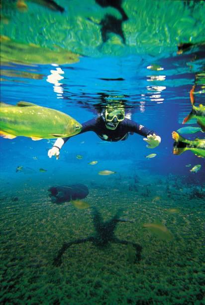 A transparência da água é impressionante. Piraputangas, pintados, dourados e pacus parecem flutuar a sua volta durante o passeio pelo Rio Sucuri, em Bonito (MS)
