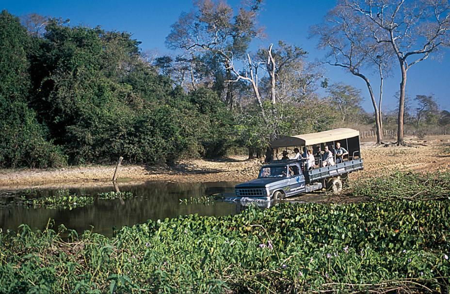 O safári fotográfico é a melhor maneira de observar animais no período da seca no Pantanal (MT e MS). Em um veículo você percorre grandes distâncias e aumenta a chance de ver espécies diferentes
