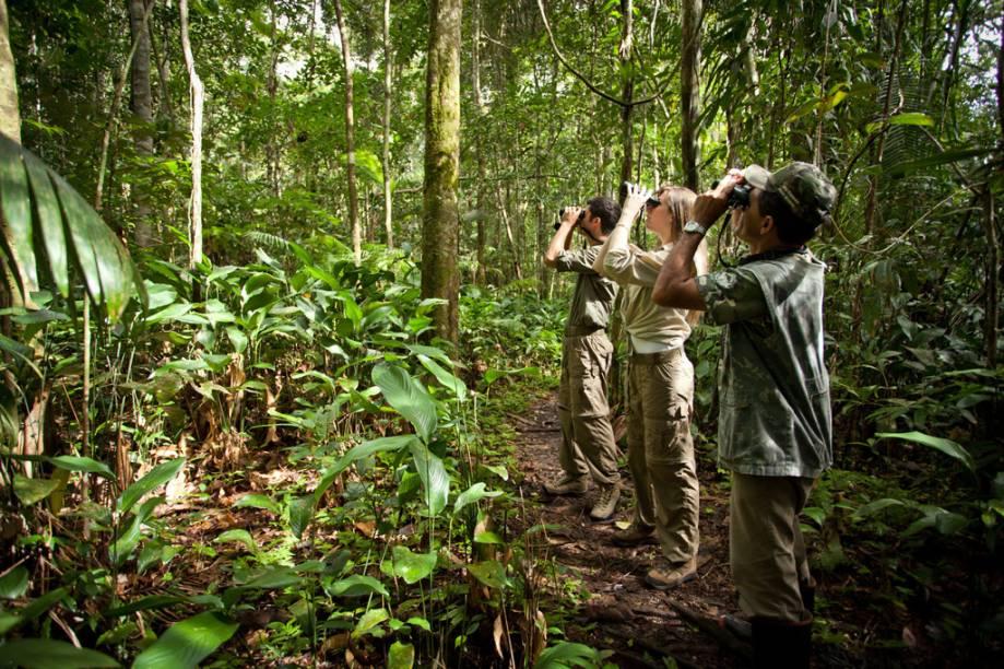 Com mais de mil espécies de aves e grande número de espécies endêmicas (espécies que só existem em um determinado lugar), a Amazônia brasileira atrai observadores de aves do mundo inteiro. O Hotel Cristalino Jungle Lodge em Alta Floresta (MT) é excelente para o birdwatching