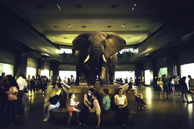 museu-de-historia-natural-nova-york-guian-bolisay-flickr-creative-commons.jpeg