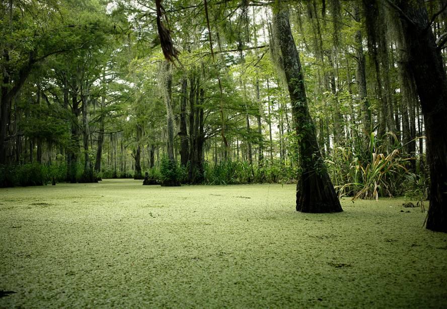 Nova Orleans possui muitos pântanos, lagunas e lagos nos seus arredores. Passeios de um dia os levarão a lugares como o Parque Nacional Jean Lafitte